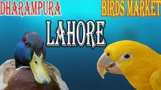 VISIT OF DHARAMPURA BIRDS MARKET LAHORE | URDU/HINDI