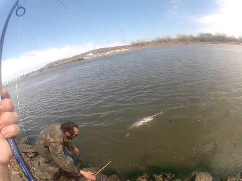 Spoonbill snagging Webbers Falls Oklahoma, 3-31-13