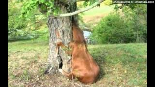 Vita Mavric & Kvartet Akord - Konja si bom kupil