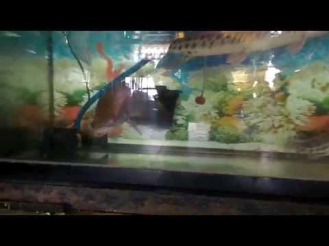 Hải Tượng Long và Sấu mỏ vịt