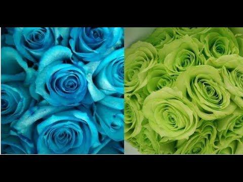 Cara Membuat Mawar Biru Dan Hijau