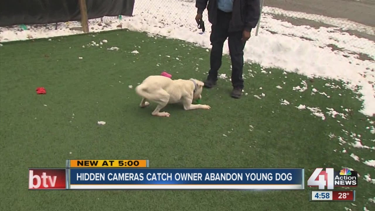 Cameras catch owner dumping dog