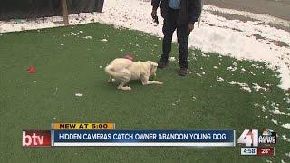 Cameras catch owner dumping dog