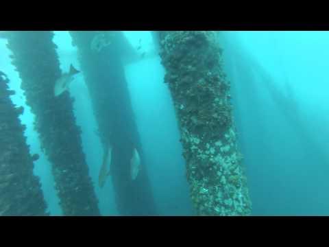 Spearfishing Gabon - Oil Rig life and big Cobia