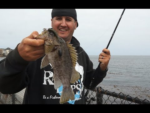 Surf fishing with bass gear, Carmel & Monterey CA! Ft. Travis Moran