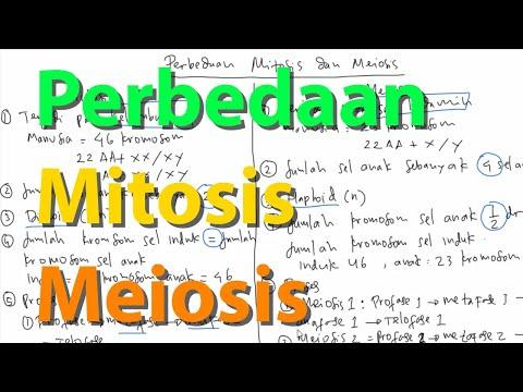 Video Pembelajaran Perbedaan Mitosis dan Meiosis