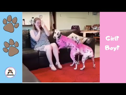 Pets Gender Reveal Ideas Compilation 2018 Animals Do Pregnancy