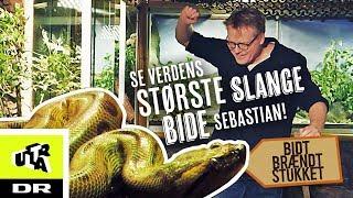 Se verdens største slange bide Sebastian! - Anakonda | Bidt, brændt og stukket