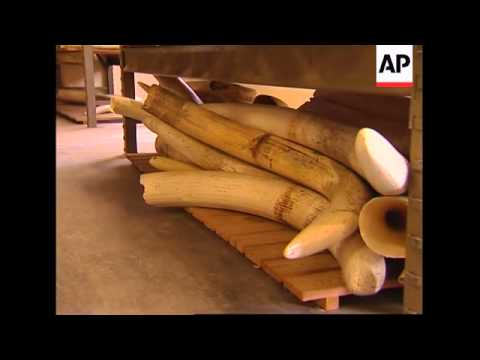 Huge collection of ivory auctioned