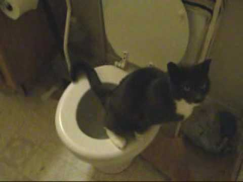 Our smart cat uses the toilet…
