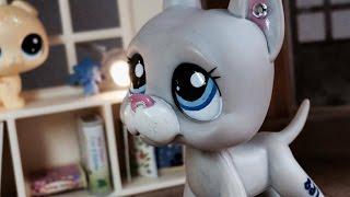 Littlest Pet Shop: Březnové kotě (Film)