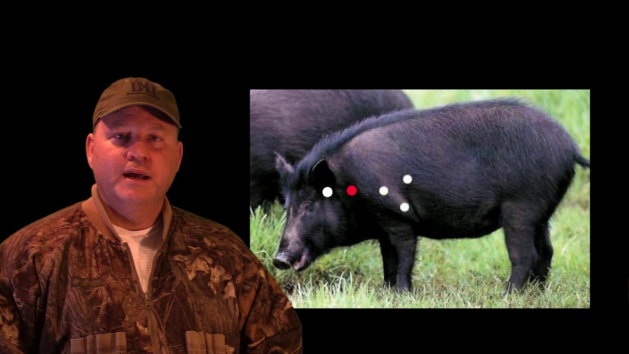 How to Hunt Hogs