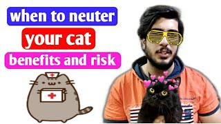 Why you should Neuter a cat and when| neutered male cat | Benefits and risks of neuter a persian cat