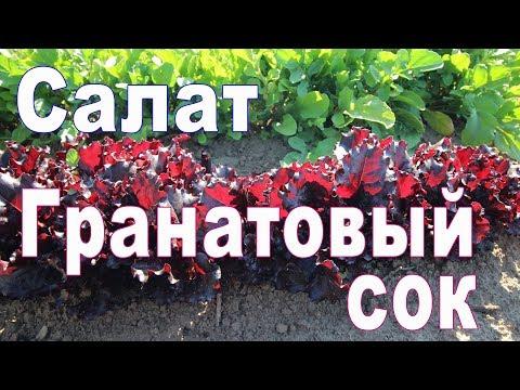 листовой салат Гранатовый сок