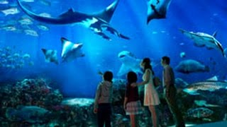 World's Largest Aquarium - Resorts World Sentosa - S.E.A. Aquarium