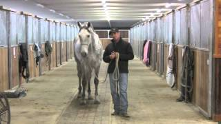 Day 3 with the 17.1 hand Andalusian that had a lot of issues.