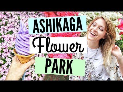 TOCHIGI JAPAN DAY TRIP// ASHIKAGA FLOWER PARK - WALKING THROUGH 350 JAPANESE WISTERIA TREES