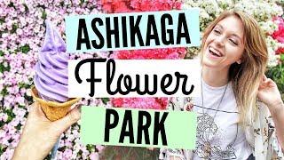 TOCHIGI JAPAN DAY TRIP// ASHIKAGA FLOWER PARK - THE MOST BEAUTIFUL WISTERIA IN THE WORLD