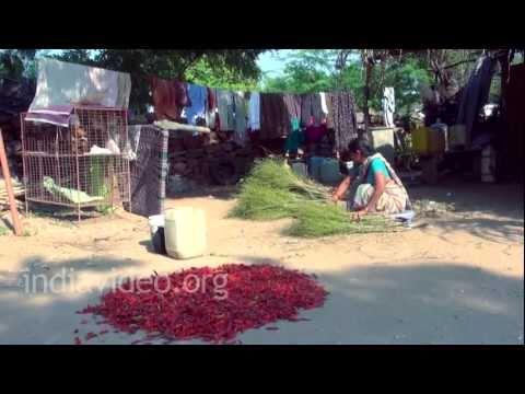 Chilli Powder Making, Andhra Pradesh