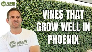 Vines That Grow Well In The Phoenix Area