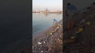 Levrek avı 3 Serdar yılmaz