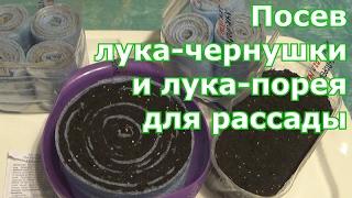 Разные способы посева лука-чернушки и лука-порея. В улитки (самокрутки), в грунт на бумагу