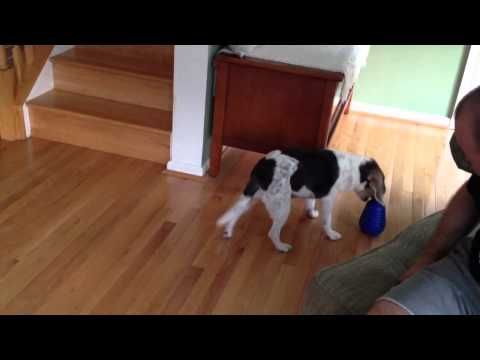 Nina Ottosson Dog Pyramid Product Review, video 3