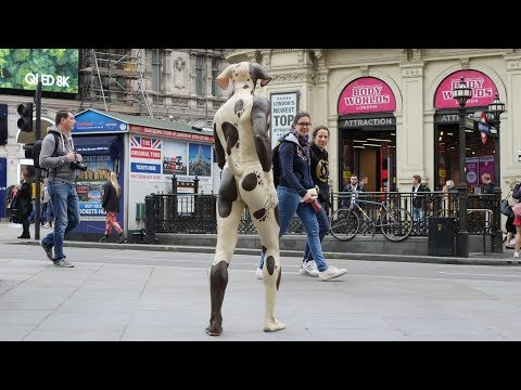 Great Dane walking streets of London