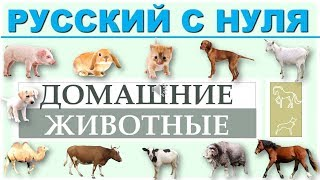 Русский язык с нуля. Домашние животные. РКИ для всех