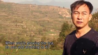 Organic Tea Farming Techniques in Daping, Anxi