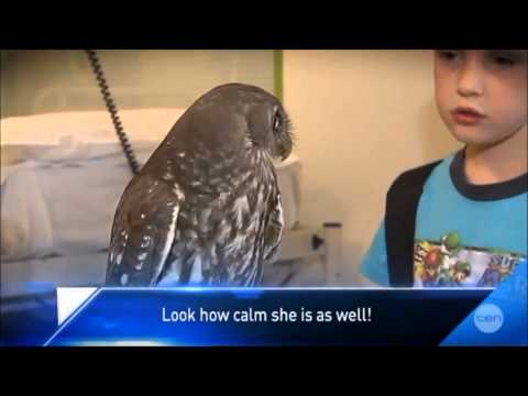 Calm Owl [Haiku]