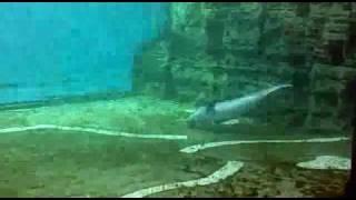 Дельфин-извращенец в океанариуме Генуи. СМОТРЕТЬ ДО КОНЦА!