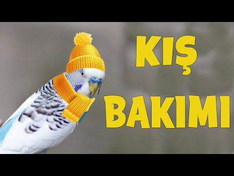 Evcil Kuşlar için Kış bakımı Muhabbet Kuşu Sultan papağanı