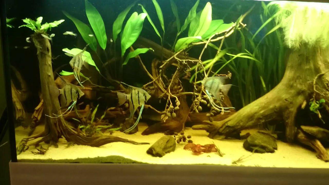 aquarium wohnzimmer - youtube - Aquarium Wohnzimmer