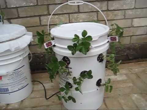 Off Grid Self Watering Container Gardening System The Ultimate Container Youtube