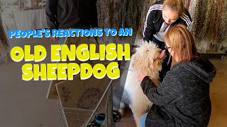 Old English Sheepdog goes to Market | Ed&Mel