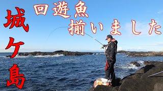 2019 12 3【磯釣り】城ケ島で良型メジナ狙ってみたが...