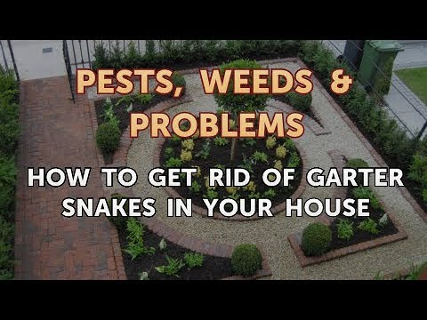 How to Get Rid of Garter Snakes in Your House
