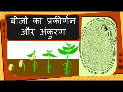 Science Plant Reproduction Seed And Germination Hindi