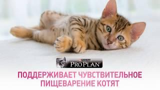 Лапахвост Pro plan сухой корм для котят