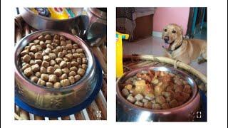 Pedigree Adult Gravy served to my Labrador / Pedigree Dogfood