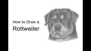 a rottweiler dog drawing lesson