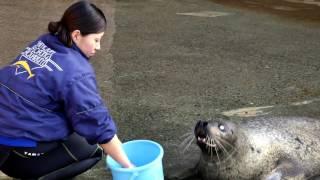 下田海中水族館で皆様をお迎えするスタッフの普段のスナップビデオを集...