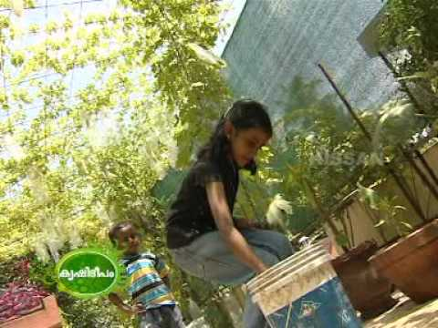 Documentary on the terrace vegetable garden youtube for Terrace kitchen garden india