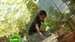 Documentary on the terrace vegetable garden