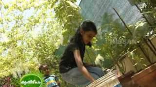Documentary on the terrace vegetable garden