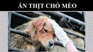 Ăn Thịt Chó Mèo tại Trung Quốc | Trung Quốc Không Kiểm Duyệt