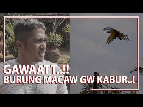 GAWAT..! Burung Macaw Gw Kabur..!!