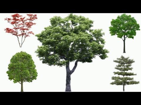 Изучаем деревья. Деревья для детей.