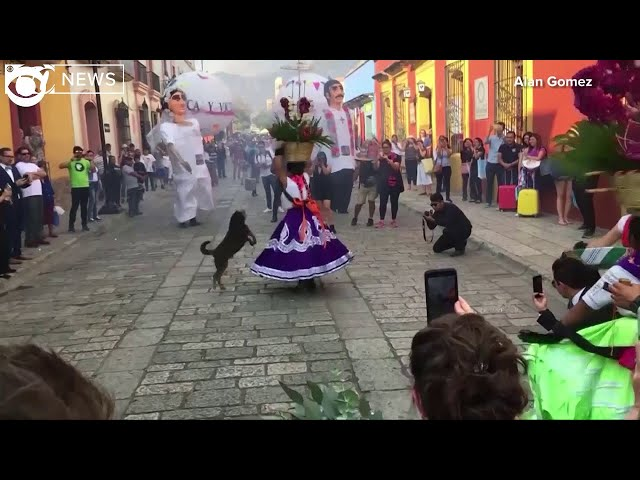 Dog dances in traditional Mexican wedding parade in Oaxaca